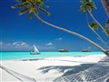 palm-beach-with-hammock[1]