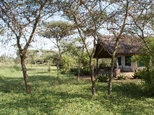 Ikoma Tented Camp, Serengeti National Park