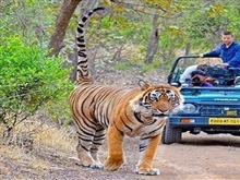 India Triunghiul De Aur Si Safari In Ranthambore Circuit Avion 2018, New Delhi